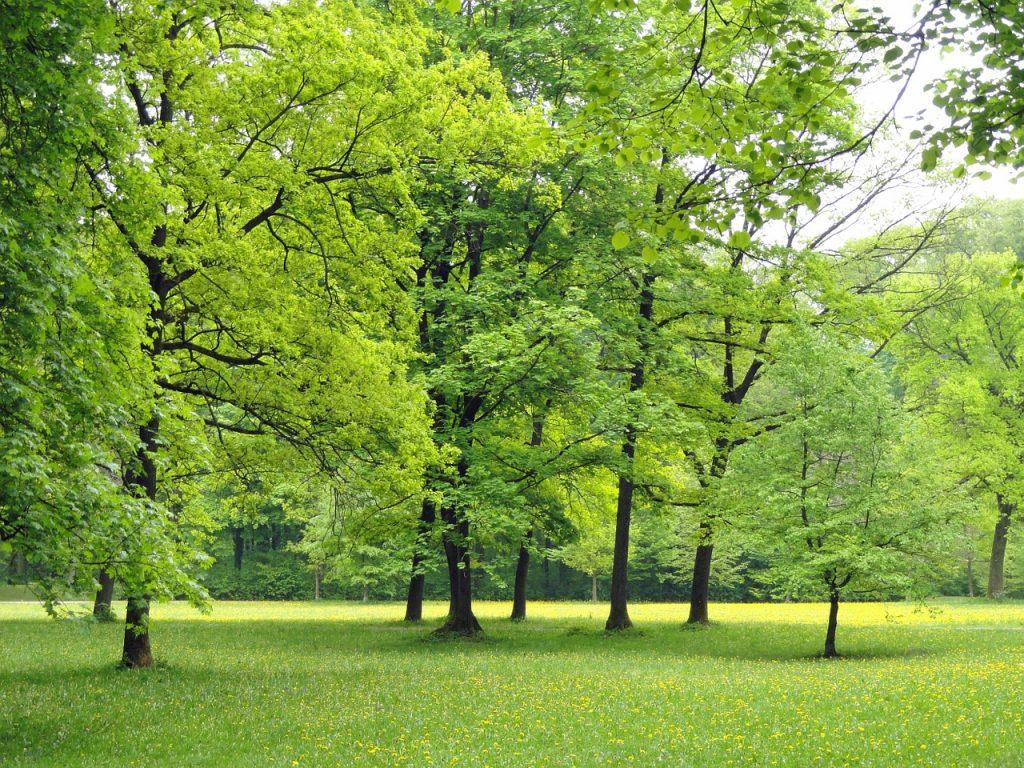 Papeleras para jardínes y parques: mantén tus espacios limpios